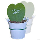 ide cadeau Cactus Coeur personnalis